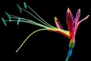 Farbenvielfalt